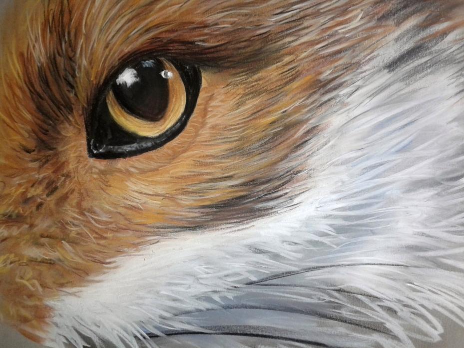 foxeye copy